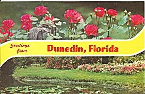 Dunedin Florida Flower Scene p32253 (Image1)