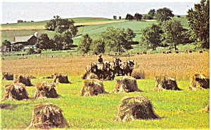 Amish Wheat Harvest Postcard p3227 (Image1)