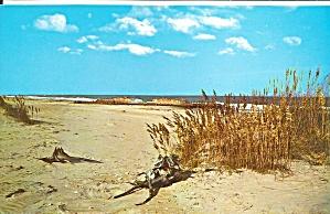 Outer Banks NC Sea Oats  and Dunes Postcard p32285 (Image1)