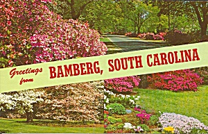 Bamberg South Carolina Dogwoods and Azaleas p32296 (Image1)