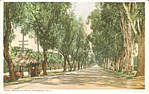 Riverside California Magnolia Drive Phostint Card p32388 (Image1)