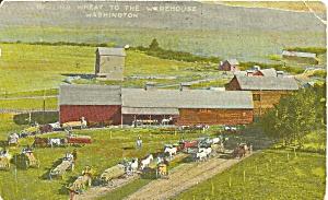 Washington Farm Scene Wheat Going to Warehouse p32603 (Image1)
