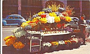 San Francisco CA Flower Stand Vintage Autos (Image1)