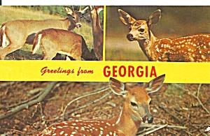 Georgia Deer Postcard p32776 (Image1)