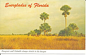 Everglades Florida Sawgrass And Palmetto Clumps P32805