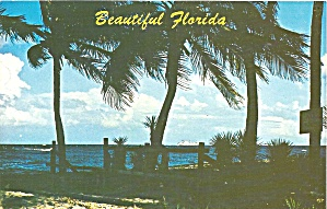 Florida Palms Blue Waters Sandy Beaches P32810