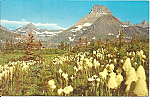 Glacier National Park MT Mt Wlbur and Bear Grass p32835 (Image1)