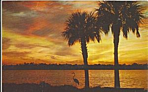 Florida Sunset Over Water Palms p32916 (Image1)