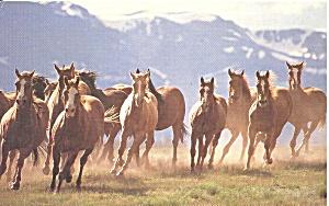 God Made the Animals Genesis !:25 Horses p32932 (Image1)