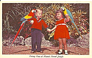 Miami Florida Parrot Jungle Postcard p32938 (Image1)