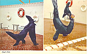 St Petersburg Beach FL Aquatarium Seal Acts p32950 (Image1)