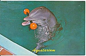 St Petersburg Beach FL Aquatarium Porpoise Entertains p32952 (Image1)