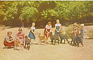 Stroudsburg PA Pocono Wild Animal Farm Karakut Lambs p32961 (Image1)