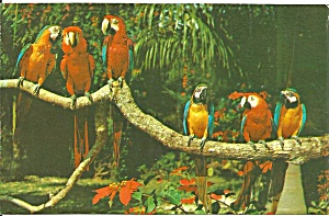 Parrot Jungle Miami Fl Parrot Life Postcard P32997