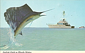 Sailfish Catch In Florida Waters Postcard P33005