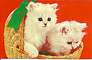 Two White Kittens In A Basket Postcard P33039