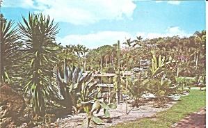 Sarasota FL Jungle Gardens Cactus Garden p33117 (Image1)