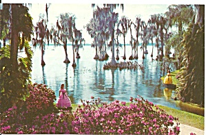 Cypress Gardens Fl Lake Eloise Trees With Spanish Moss P33121