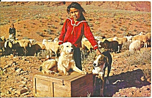 Navajo Girl And Her Sheep Dogs P33155