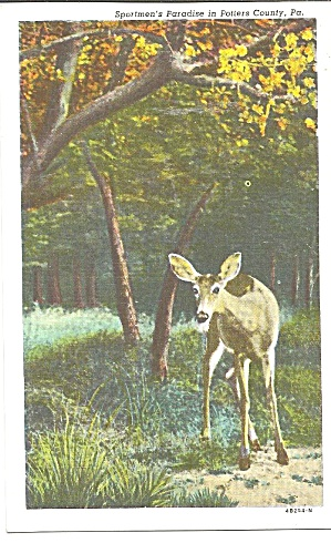 Deer In Potters County Pa Postcard P33318