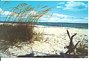 Beautiful White Sandy Beach on Florida s Coast p33360 (Image1)