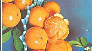 Florida Murcott Oranges Postcard  p33367 (Image1)
