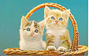 Two Cute Kittens In A Basket Postcard P33384