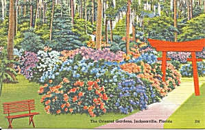 Jacksonville FL Oriental Gardens Postcard p33485 (Image1)