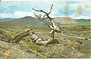 Moon National Monument ID Postcard p33566 (Image1)