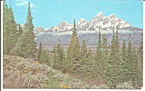 Beautiful Wyoming Scenery postcard p33605 (Image1)