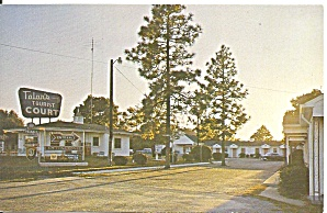 Tolar s Tourist Court Postcard p33658 (Image1)