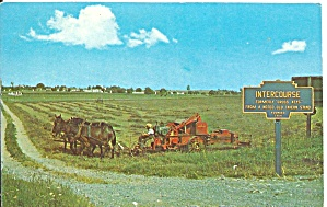 Amish Farmer Harvests Hayfield p33728 (Image1)