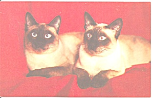 Pair Of Siamese Cats Postcard P33740