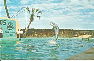 Marineland of FL Porpoise Playing Football  p34161 (Image1)