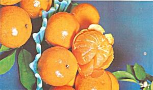 Florida Murcotts Oranges Feb Apr Postcard  p34174 (Image1)
