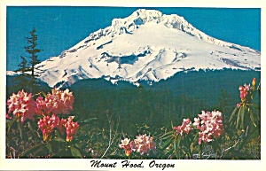 Mt Hood Or With Mountain Rhododendrons P34190
