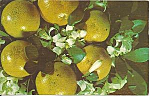 Florida Grapefruit with Blossoms p34912 (Image1)