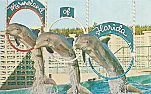 Marineland FL Porpoises Jumping Through Hoops p34215 (Image1)