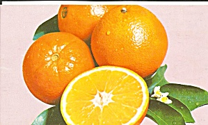 Florida Navel Oranges Nov Jan Postcard P34222