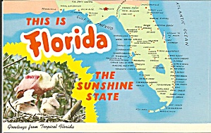 Map Of State Of Florida Postcard P34242