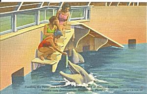 Marineland FL Feeding Porpoises p34372 (Image1)