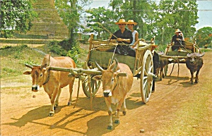 Northern Thailand Carts Drawn By Buffalos And Cows P34404