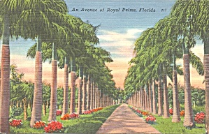 Avenue Of Royal Palms In Florida P34416