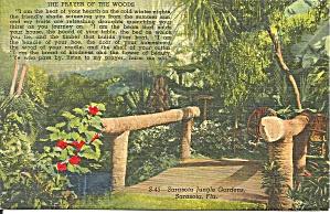 Sarasota Jungle Gardens Prayer of The Woods p34564 (Image1)