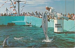 Marineland of Florida Feeding Time p34601 (Image1)