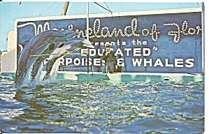 Marineland of Florida Porpoises p34602 (Image1)