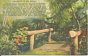 Sarasota Jungle Gardens Florida p34789 (Image1)