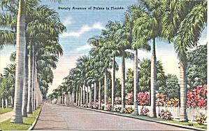 Stately Avenue of Palms FL p34801 (Image1)