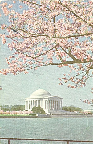 Jefferson Memorial Cherry Blossoms Washington Dc P34992