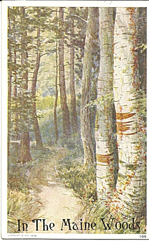 In The Maine Woods Birch Trees Postcard P35200 1912